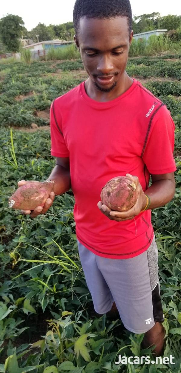 S.A.G Fresh Fruit & Vegetables Farm-7