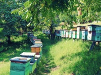 Bee Keeping lesons / Apriculture