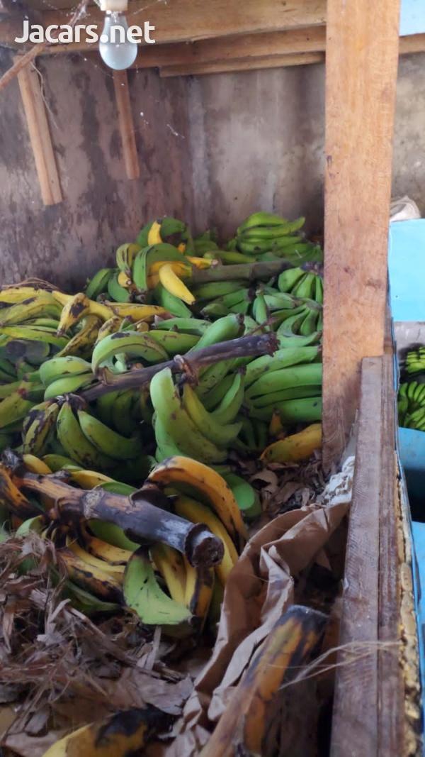 S.A.G Fresh Fruit & Vegetables Farm-8