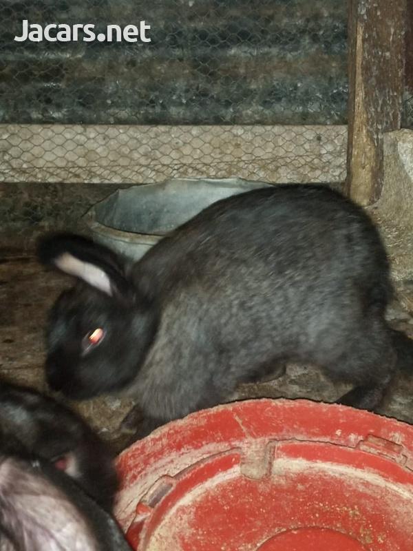 Young Rabbits-3