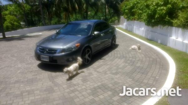 Honda Accord 2,4L 2009-4