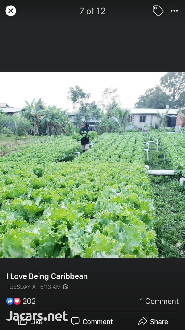 S.A.G Fresh Fruit & Vegetables Farm-6