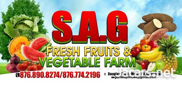 S.A.G Fresh Fruit & Vegetables Farm-1