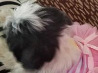 Fun loving 6 months old puppy