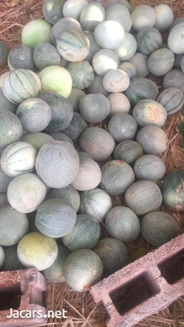 S.A.G Fresh Fruit & Vegetables Farm-9
