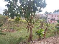 Quarter acre land 4 sale