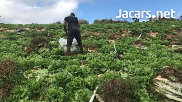 S.A.G Fresh Fruit & Vegetables Farm-12